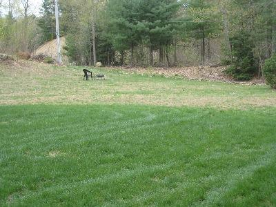 Country Lawncare Inc Homepage Granby Ma Country